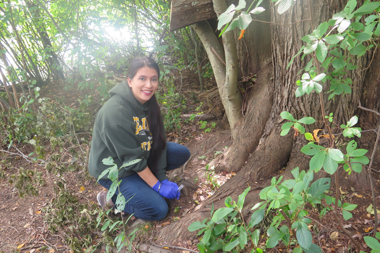 3. Collecting from Forest